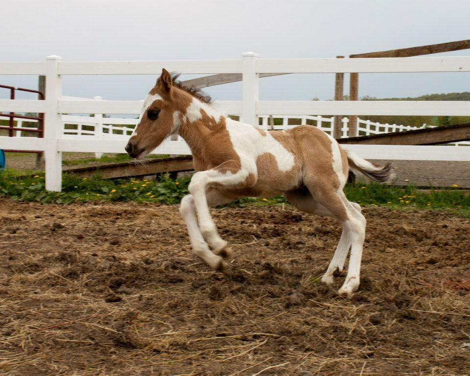 Kirsten Gillibrand >> Paint Baby Horses - Image Mag