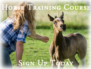 Horse Training Course